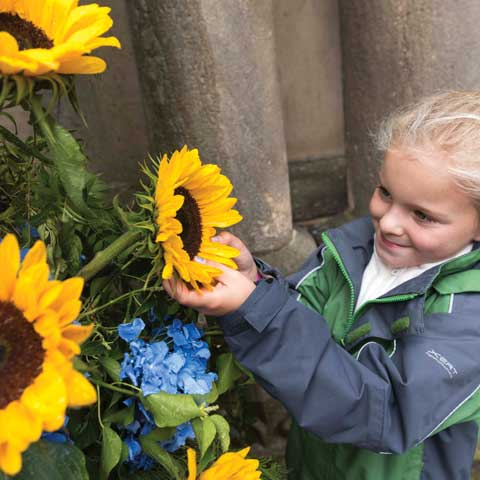 Chorley Flower Show - Sunflower-girl