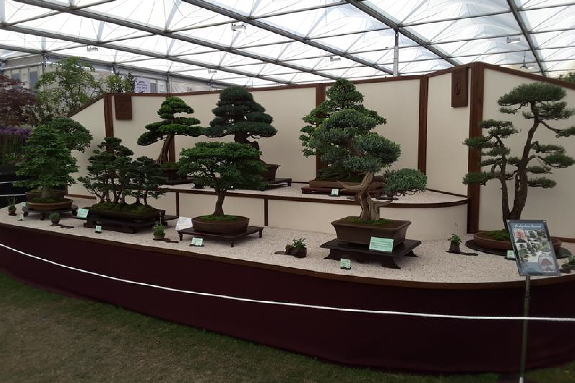 Derbyshire Bonsai