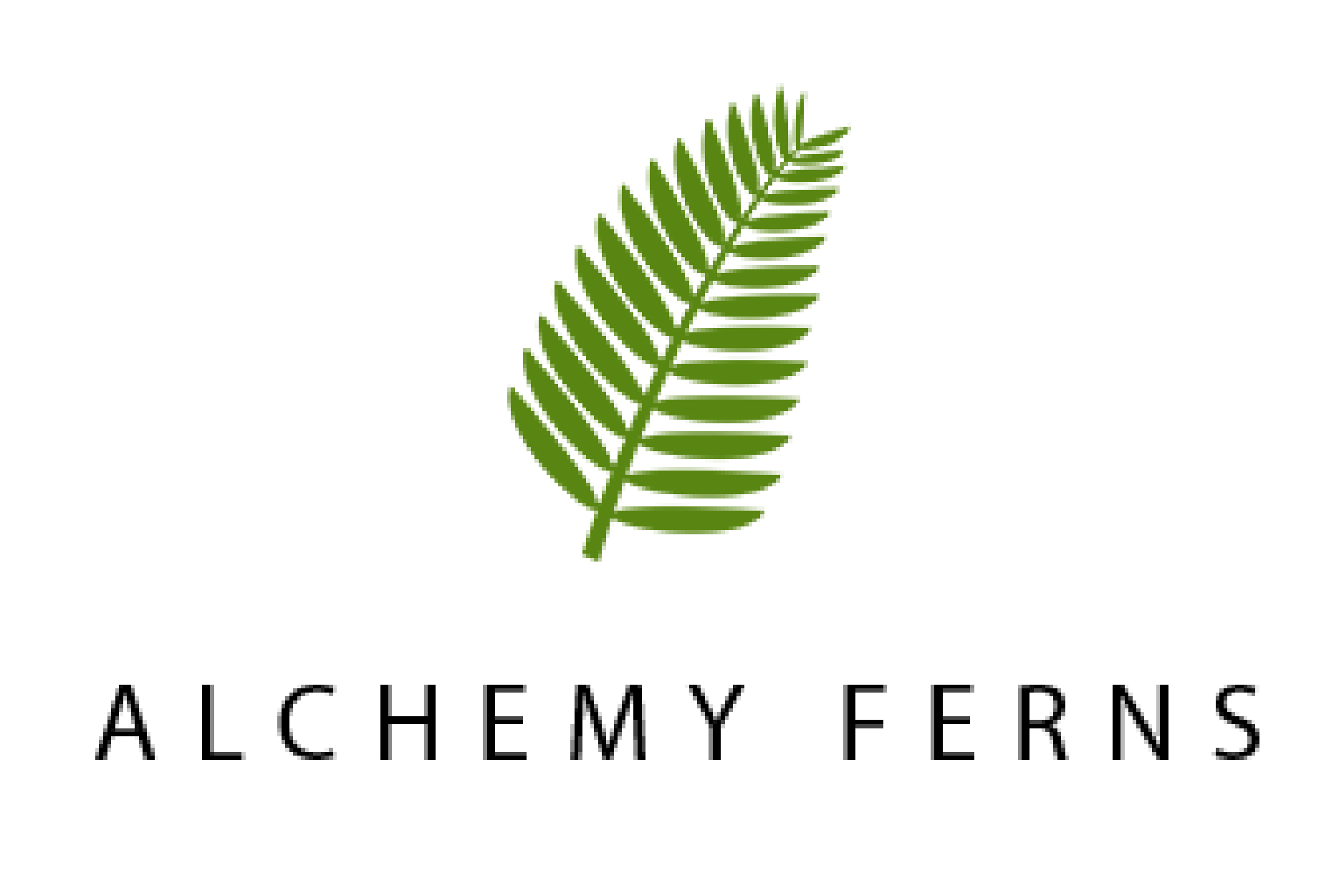Alchemy Ferns